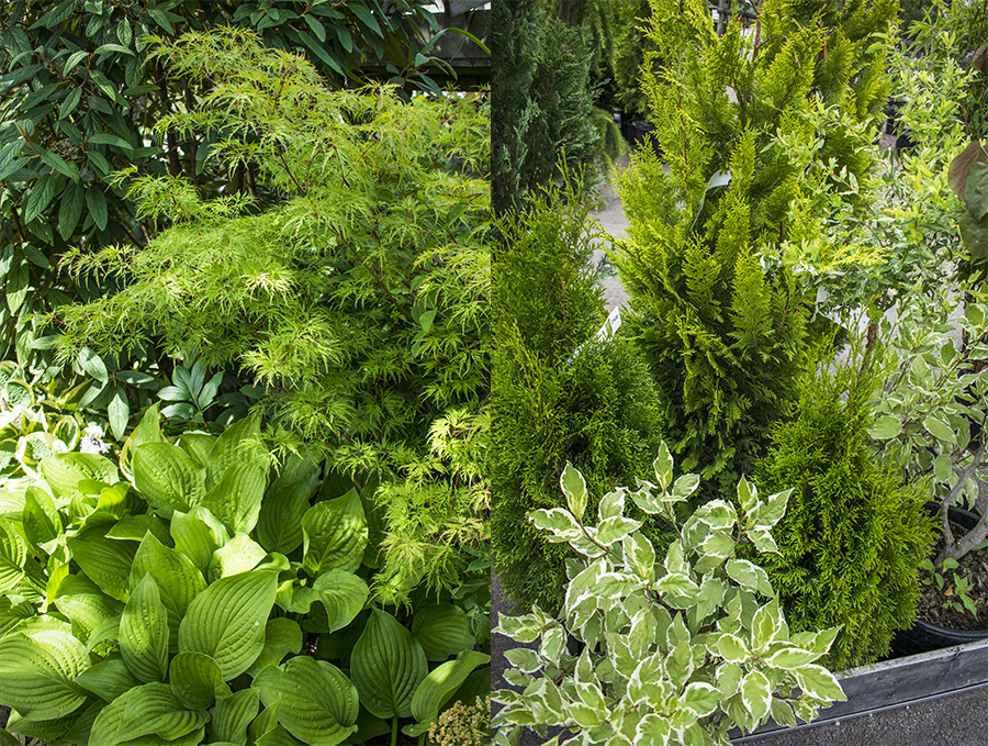 Flyinge Plantshop höjdskillnader växter