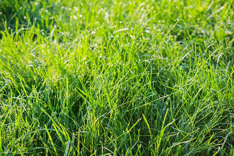 Förbered gräsmattan inför vintern