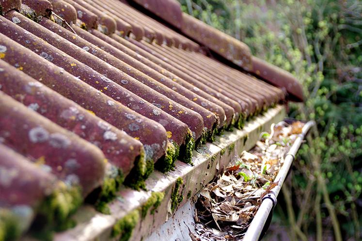 Höstlöv i stuprännor och alger och påväxt på tak