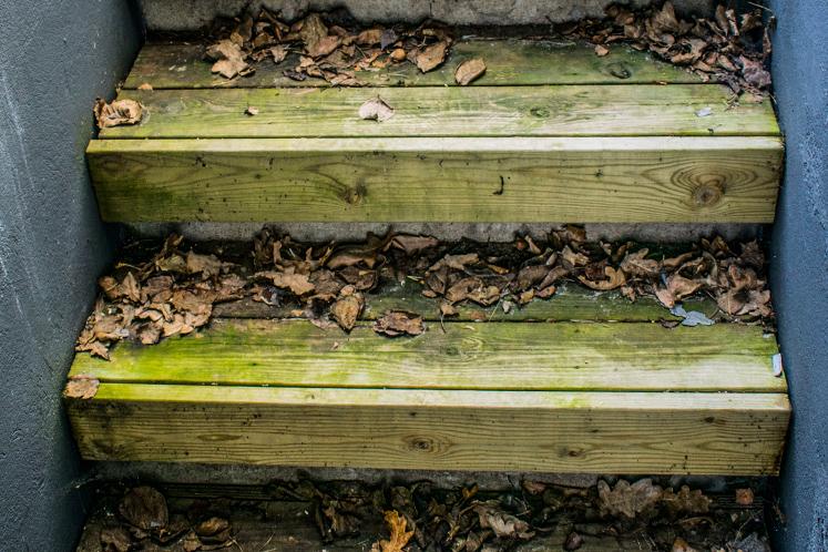 Höstlöv och alger på trätrappa