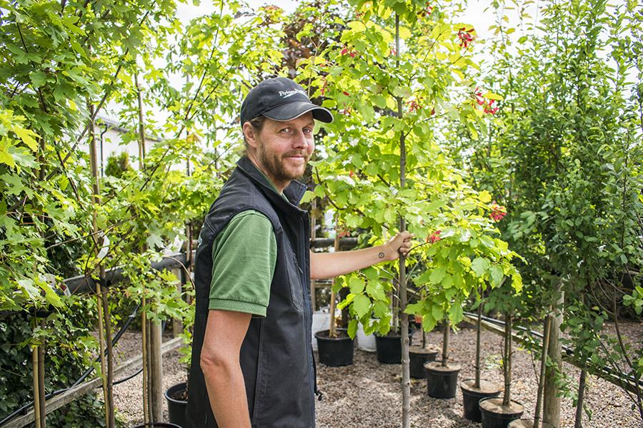 Flyinge Plantshop plantering träd