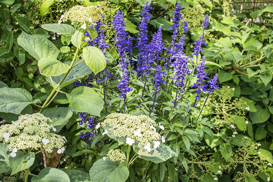 Flyinge Plantshop visningsträdgård